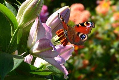 Papiers peints papillon 188