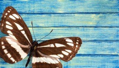 Papiers peints Papillon.
