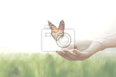 Papiers peints papillon coloré se penche confiant sur les mains d'une femme