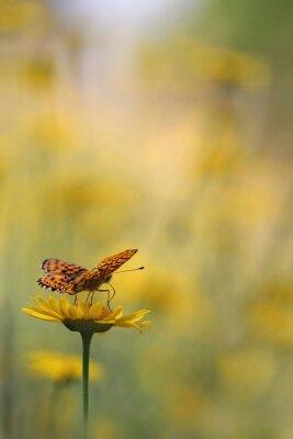 Papiers peints Papillon dans le jardin
