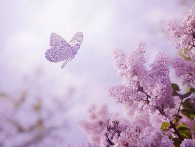 Papiers peints Papillon et la fleur