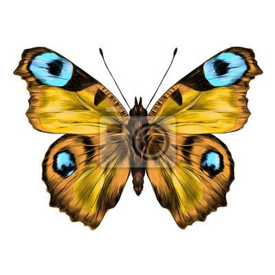Papillon ouvert ailes haut vue sym trique dessin graphiques papier peint papiers - Papillon dessin couleur ...