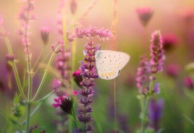 Papiers peints Papillon, sauvage, fleur
