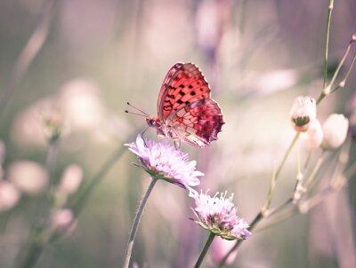 Papiers peints Papillon sur la fleur sauvage