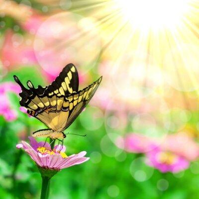 Papiers peints Papillon sur une fleur
