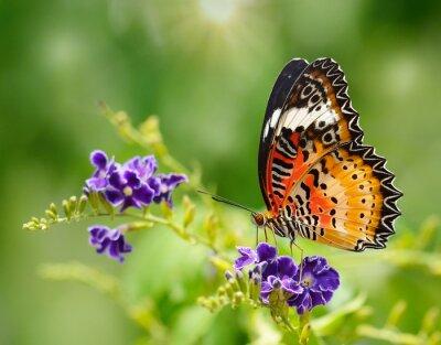 Papiers peints Papillon sur une fleur violette