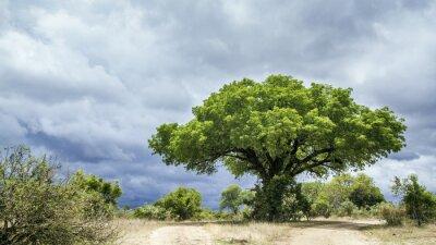 Papiers peints Parc national Kruger paysage, Afrique du Sud