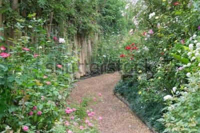 Papiers peints Passerelle dans la roseraie botanique, stock - Photo
