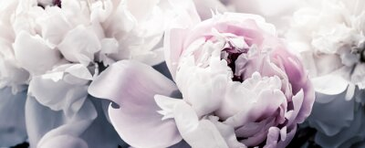 Papiers peints Pastel peony flowers as floral art background, botanical flatlay and luxury branding design