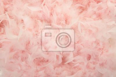 Pastel rose plumes d'un boa dans une image plein cadre