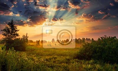 Papiers peints Paysage, aube ensoleillée dans un champ