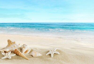Papiers peints Paysage avec des coquillages sur la plage tropicale