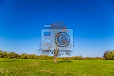 Paysage avec un arbre sans feuilles