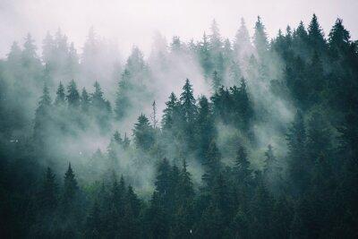 Papiers peints Paysage brumeux avec forêt de sapin dans le style rétro vintage hipster