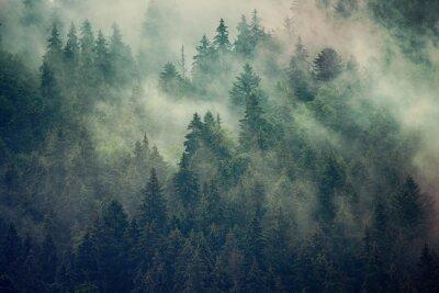 Papiers peints Paysage brumeux avec forêt de sapins dans un style rétro vintage hipster