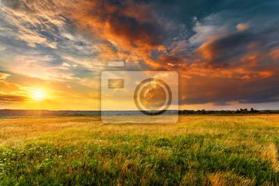 Papiers peints Paysage coucher de soleil avec un champ d'herbe sauvage et une forêt sur fond.