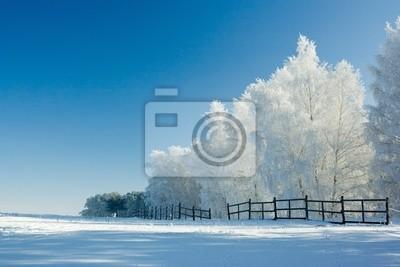 Paysage d'hiver et des arbres