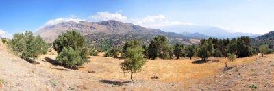 Papiers peints Paysage d'oliviers sur l'île de Crète