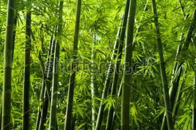 Papiers peints Paysage de bambou dans la forêt tropicale humide, Malaisie