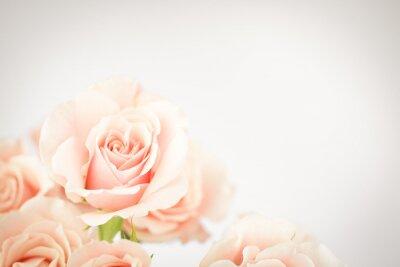 Papiers peints Peach rose cluster avec vignette