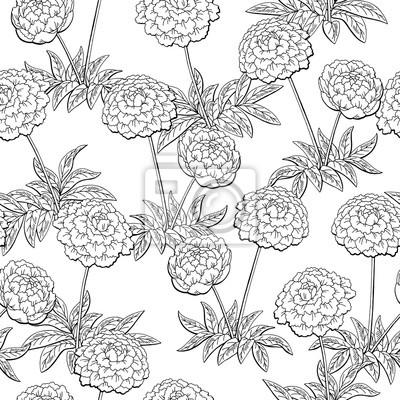 Peony Fleur Graphique Noir Blanc Seamless Pattern Croquis Vecteur