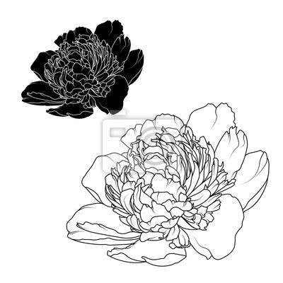 Peony Rose Fleurs En Noir Et Blanc Contrastant Des Elements De