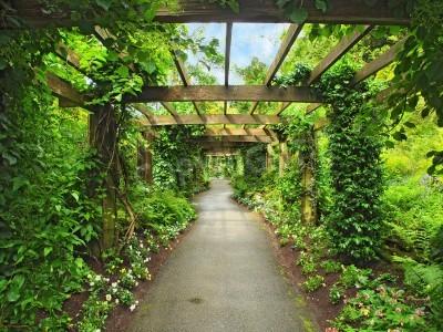 Papiers peints Pergola passage dans le jardin, entouré de glycines et plantes grimpantes