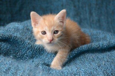 Papiers peints Petit chaton mignon sur fond bleu couverture