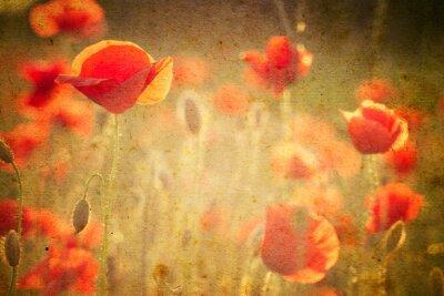 Papiers peints Photo de fleurs de coquelicots