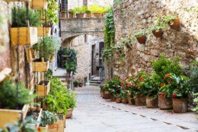 Papiers peints Photographie avec Orton effet d'une rue décorée avec des plantes et des fleurs dans la ville italienne historique de Spello (Ombrie, Italie)