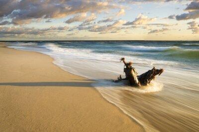 Papiers peints Pien wyrzucony na Morska Plaze