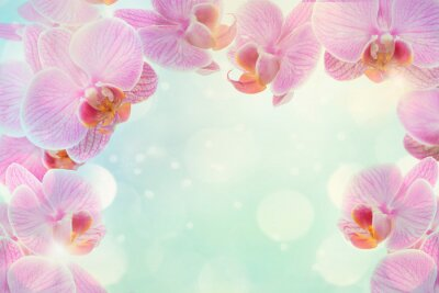Pink orchid flowers at a blue background with bokeh and bright light