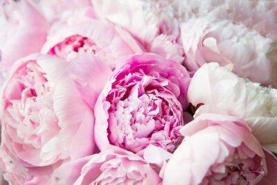 Papiers peints Pink peonies blossom background. Flowers.