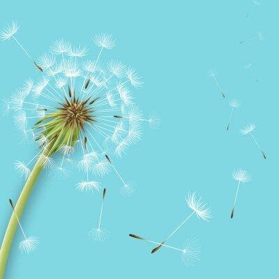 Papiers peints Pissenlit blanc aux pollens isolés