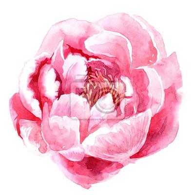 Pivoine Rose Aquarelle Papier Peint Papiers Peints Couleur