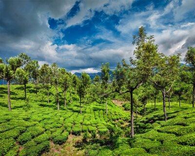 Papiers peints Plantations de thé en montagne