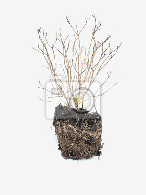 plante morte papier peint papiers peints d compos feuilles isol sur blanc. Black Bedroom Furniture Sets. Home Design Ideas