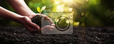 Papiers peints Planter dans les mains. Concept d'écologie. Fond de la nature