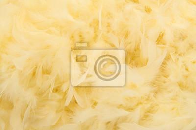 Plumes, doux, jaune, boa, plein, cadre, image