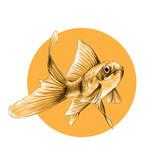 Poisson rouge croquis graphiques couleur dessin dune - Croquis poisson ...