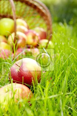 Pommes biologiques sains dans le panier.