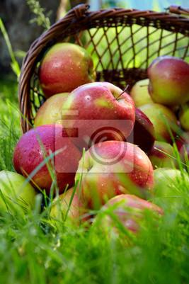Pommes dans le panier.