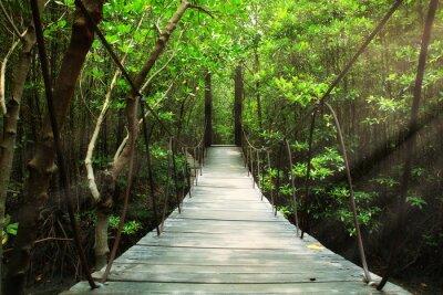 Papiers peints Pont suspendu dans la forêt