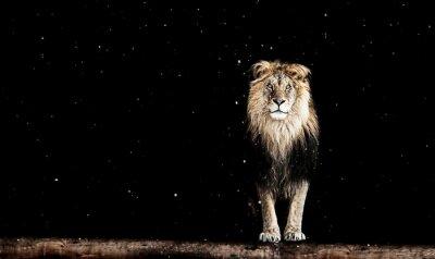 Papiers peints Portrait, beau, lion, géométrique, modèle