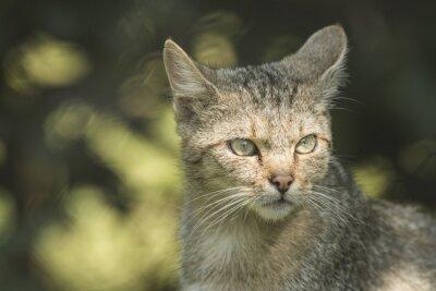 Portrait d'un chat sauvage de forêt sur le fond