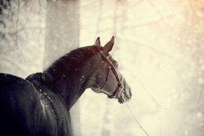 Papiers peints Portrait d'un cheval de sport