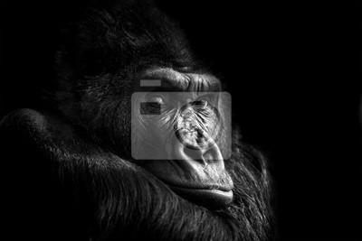 Papiers peints Portrait d'un gorille