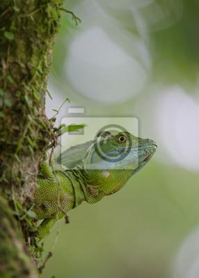 Portrait d'un lézard basilic regardant autour du coin d'un arbre à l'extérieur