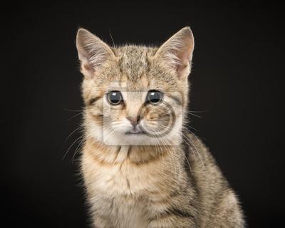 Portrait d'un mignon bébé chat tigré en regardant la caméra sur un fond noir