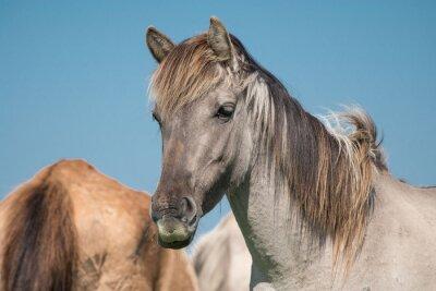 Portrait de cheval sauvage